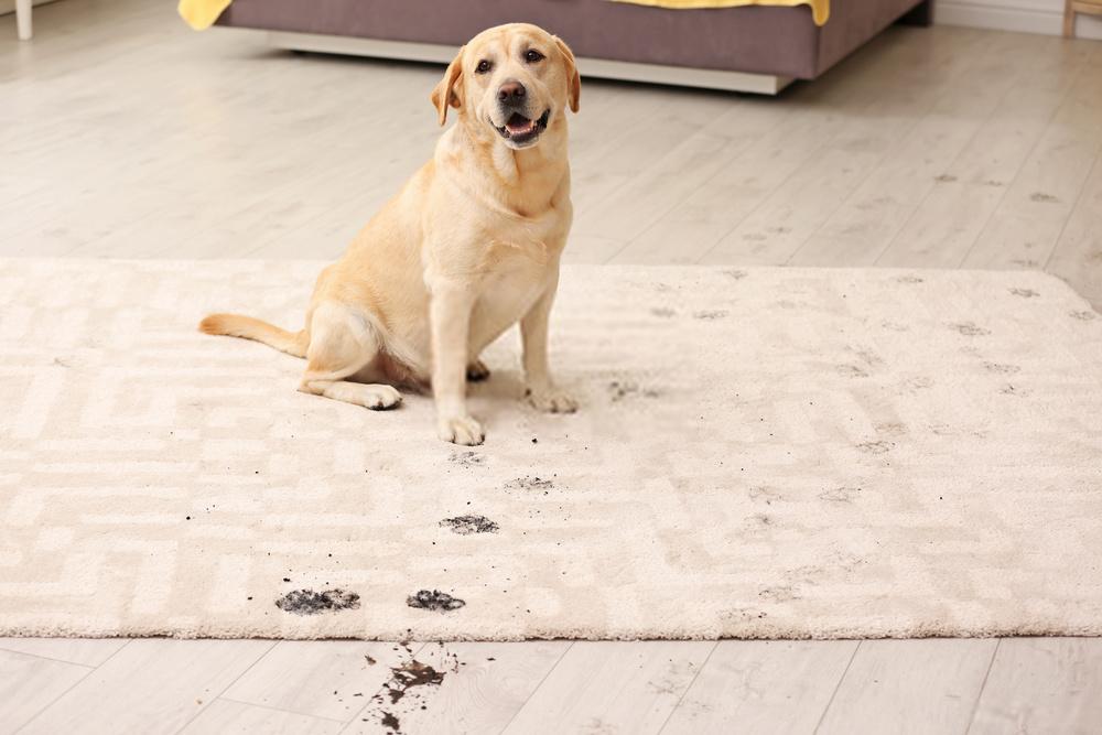 Is Hoover Carpet Cleaner Safe for Pets
